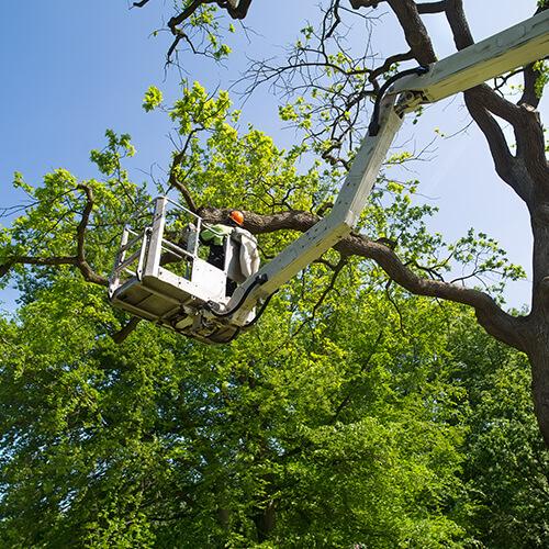 Wycinka drzew w miejscach trudno dostępnych przy pomocy wysięgnika koszowego