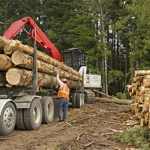 Wycinka drzew oraz przygotowanie terenów pod inwestycje