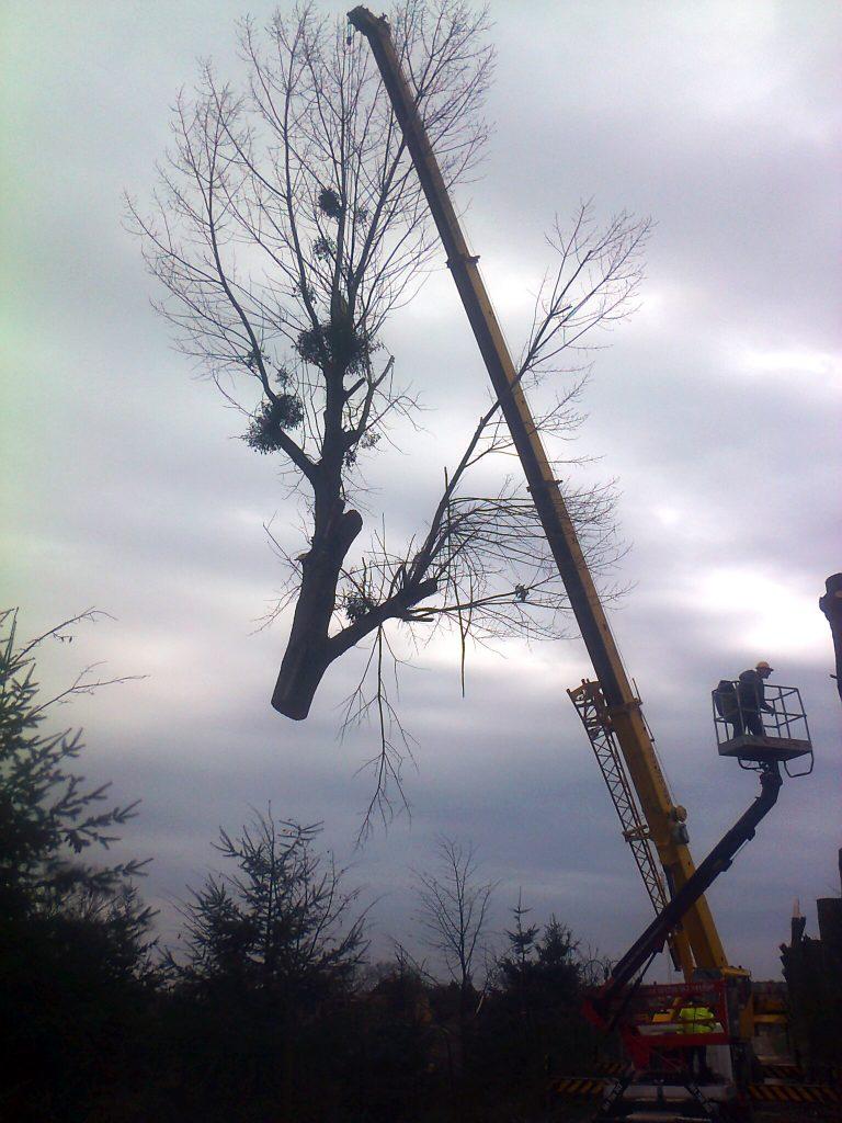 Podnoszenie ściętego drzewa