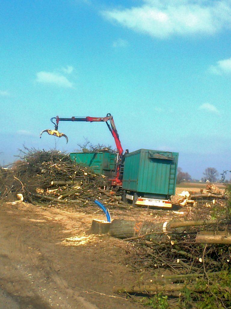 Zbieranie drewna