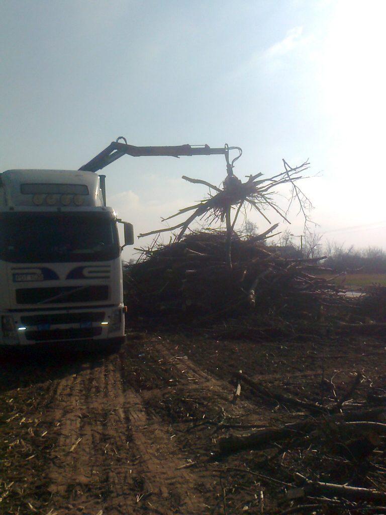 Zbieranie ściętego drewna