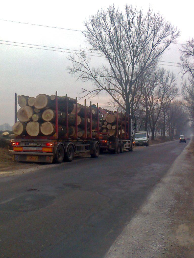 Układanie ściętych drzew